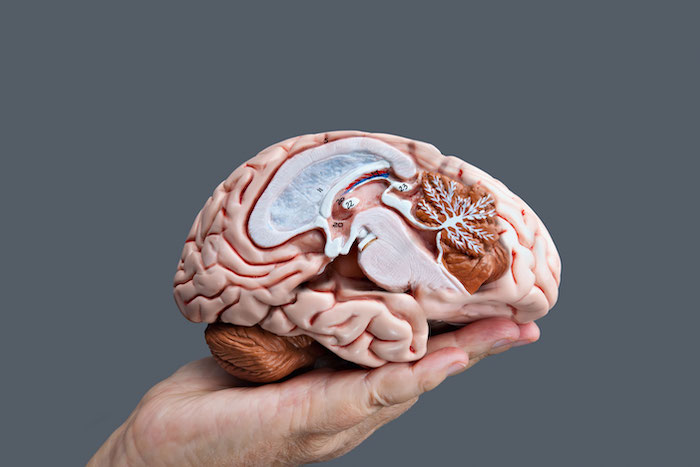 Brain diagram hemisphere